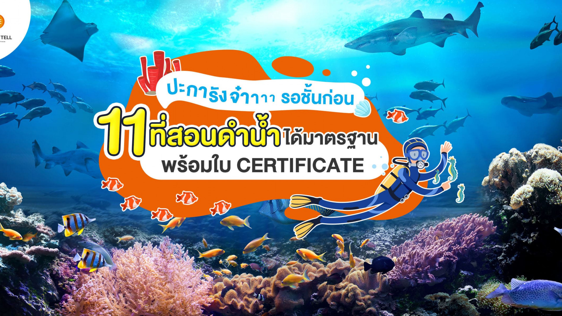 ชี้เป้า 11 ที่เรียนดำน้ำ ได้มาตรฐาน ปลอดภัย พร้อมใบ Certificate อัปเดตปี 2020