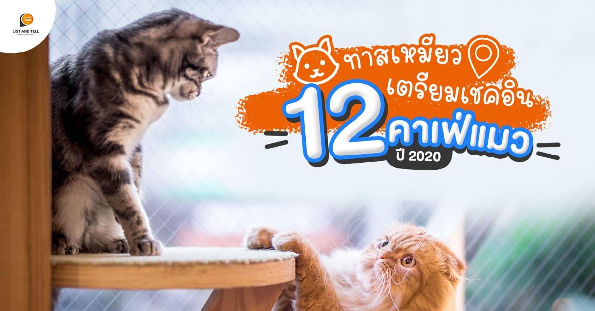 รวม 12 คาเฟ่แมว เปิดแล้ว พร้อมให้ทาสแมวเช็กอินรัว ๆ ปี 2020